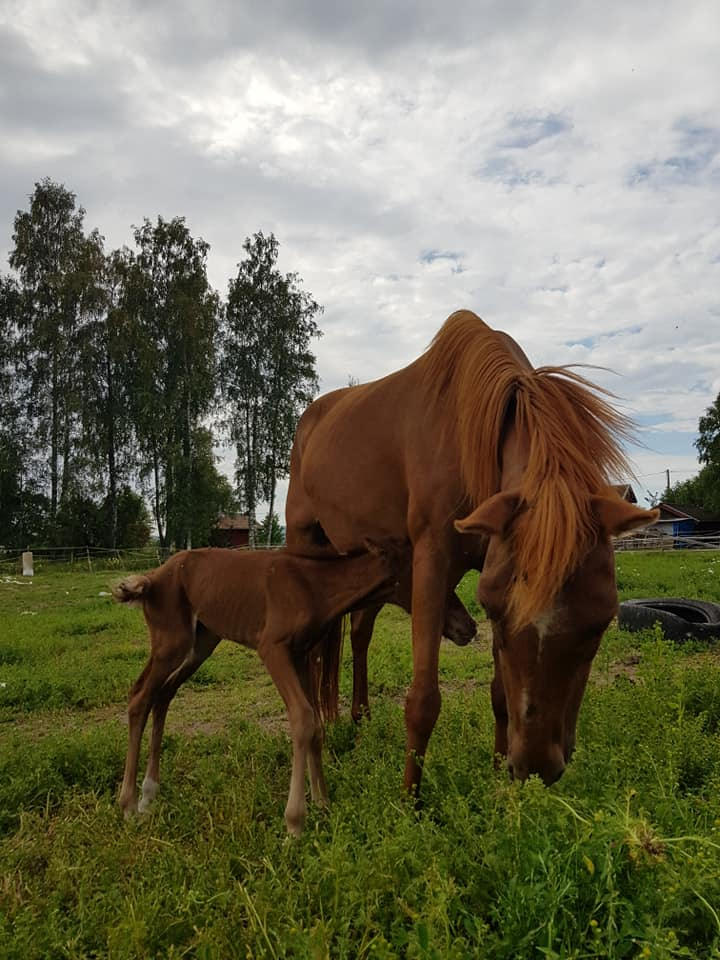 Maleke with foal 2018
