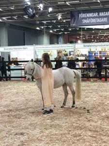 Euro_Horse 1