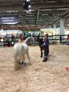Euro_Horse 2