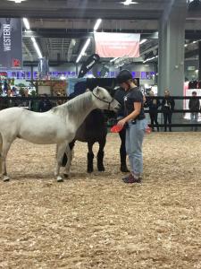 Euro_Horse 3