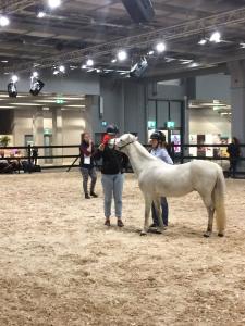 Euro_Horse 4