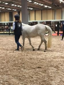 Euro_Horse 7